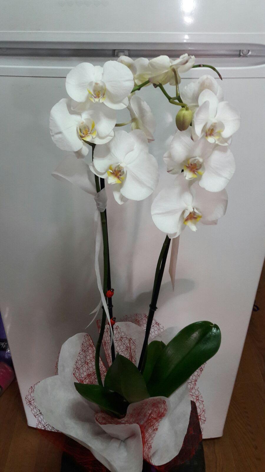 Manolya Çiçekçilik