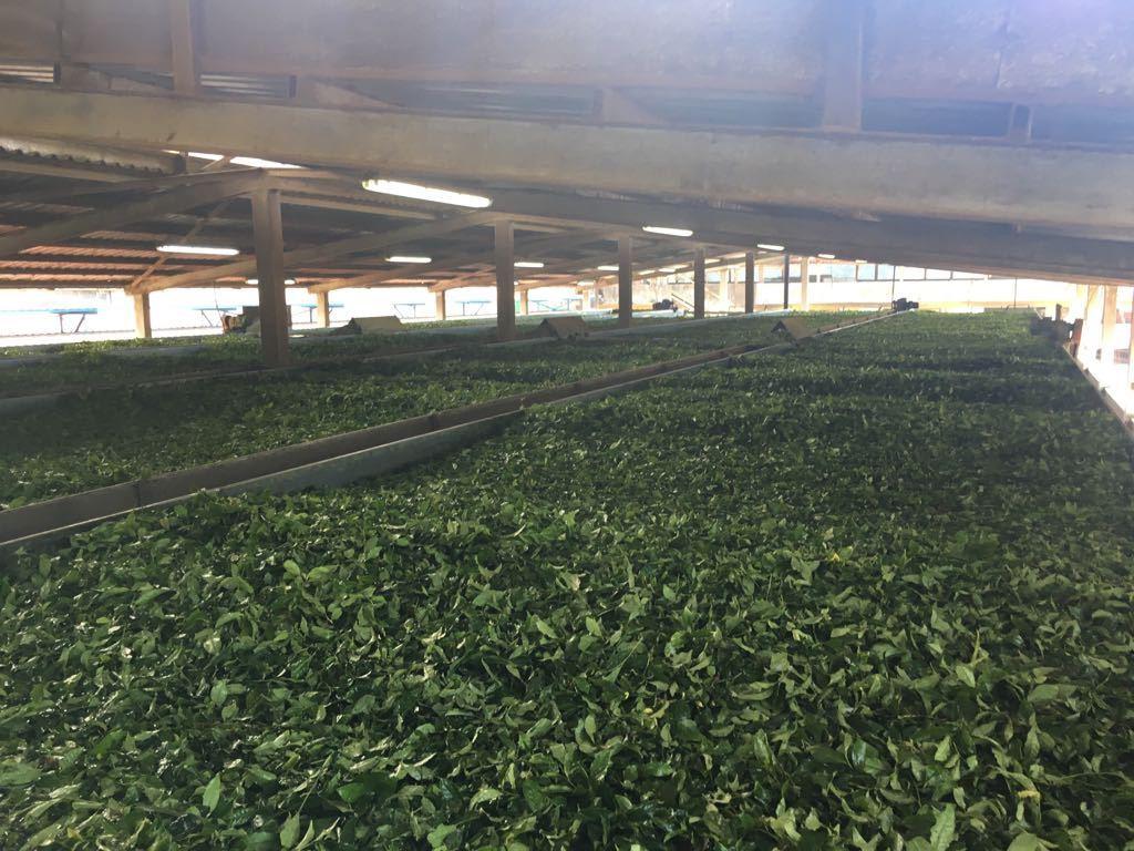 Kanaat Çay Sanayi ve Ticaret LTD ŞTİ